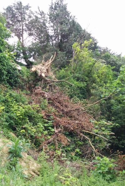 D bitage d 39 un arbre d racin montagnac abattage for Prix de l elagage d un arbre