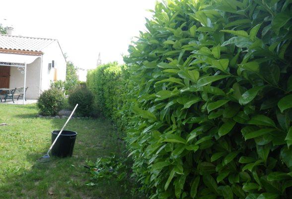 Taille haies lauriers montagnac entretien des travaux for Jardinier paysagiste herault